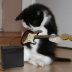 Gato guitarrista (Foto: divulgação)
