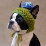 Filhote de cachorro com touca de lã. (Foto: divulgação)