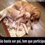 Não basta ser pai, tem que participar!(Foto: Divulgação)