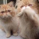 O ideal é oferecer a eles ração apropriada e comida para gatos enlatada. (Foto: Divulgação)