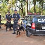 Eles também são usados como cães policiais. (Foto: Divulgação)