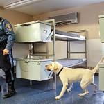 O labrador é usado a serviço da população. (Foto: divulgação)