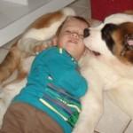 Eles são muito pacientes e ótimos companheiros para as crianças (Foto: Divulgação)
