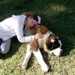 Como outras raças, o São Bernardo gosta de um carinho do dono (Foto: Divulgação)