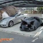 Garagem de gatos? (Foto: Divulgação)