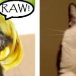 Mensagem para a gatinha. (Foto: Divulgação)