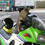 Passeando de moto. (Foto: Divulgação)