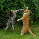 Estão dançando ou lutando? (Foto: Divulgação)