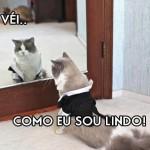 Gato narcisista. (Foto: Divulgação)