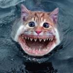 Seria um tubarão-gato ou um gato-tubarão? (Foto: Divulgação)