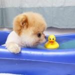 Boo tomando banho. (Foto:Divulgação)