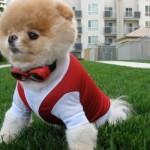 O cão mais fofo do mundo com um look mais esportivo. (Foto:Divulgação)