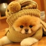 Boo sempre aparece em suas fotos usando uma roupa diferente. (Foto:Divulgação)
