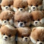 Boo junto com os seus ursinhos de pelúcia. (Foto:Divulgação)
