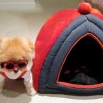 Boo e sua casinha. (Foto:Divulgação)