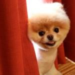 Boo tentou se esconder atrás da cortina. (Foto:Divulgação)