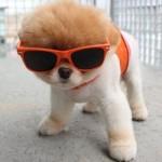 Com um charmoso óculos de sol. (Foto:Divulgação)