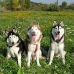 Também estão entre os cães que mais gostam de brincar. (Foto: Divulgação)