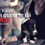 A fidelidade de um cão não tem preço. (Foto:Divulgação)