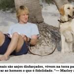 Os cães são mais fiéis que os humanos. (Foto:Divulgação)