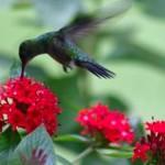 Eles se adaptam facilmente a qualquer clima e tipo de vegetação. (Foto: Divulgação)