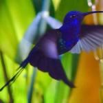 Ele está presente desde as áreas mais frias e geladas às florestas tropicais e quentes. (Foto: Divulgação)