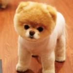 Ele tem aparência bastante semelhante ao de um urso de pelúcia (Foto: Divulgação)