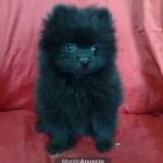 Ele pode ser encontrado em várias cores, como a preta (Foto: Divulgação)