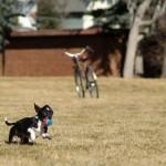 Ele adora uma brincadeira, como a maioria dos cães (Foto: Divulgação)