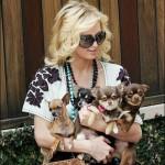 O chihuahua é um dos cães preferidos da socialite Paris Hilton (Foto: Divulgação)