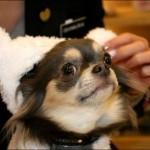 Esse ganhou uma orelha de pano para se proteger do frio (Foto: Divulgação)