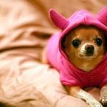 Esse ganhou uma roupa para se proteger do frio (Foto: Divulgação)