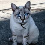 Os gatos podem viver de 15 a 20 anos, em média (Foto: Divulgação)