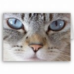 A visão dos gatos é mais apurada em ambientes escuros (Foto: Divulgação)