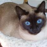 Não se esqueça de disponibilizar uma caixinha de areia sanitária para o seu gato (Foto: Divulgação)