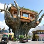 Restaurante na árvore, localizado no Japão (Foto: Divulgação)