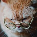 Gatos idosos: cuidados, como alimentar