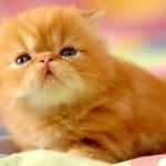 Filhote de gato (Foto: Divulgação)