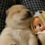 Filhote de cachorro sonhando (Foto: Divulgação)