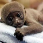 Filhote de macaco (Foto: Divulgação)