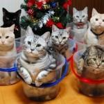 Filhotes de gato (Foto: Divulgação)