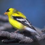 Os pássaros coloridos são atração por onde passam (Foto: Divulgação)