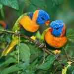 Existem mais de 5.000 espécies de pássaros, muitas delas lindas e coloridas (Foto: Divulgação)