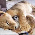 Dormindo com o inimigo (Foto: Divulgação)
