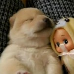 Dormindo no colo (Foto: Divulgação)