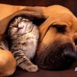 Aproveitando a amizade (Foto: Divulgação)