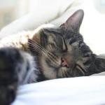 Qualquer cantinho vira cama para os gatos, quando o sono aperta (Foto: Divulgação)