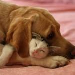 Contando com a proteção do amigo (Foto: Divulgação)