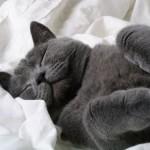 Os gatos adoram dormir (Foto: Divulgação)