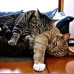Dormindo de qualquer jeito (Foto: Divulgação)